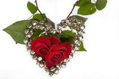 Zwei Rosen für Valentinsgruß Lizenzfreies Stockbild