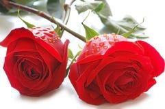 Zwei Rosen mit Wasser lässt ISO fallen Stockbild