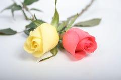 Zwei roses06 Stockfoto