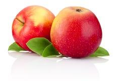 Zwei rote Apfelfrüchte und Grünblätter lokalisiert Lizenzfreies Stockfoto