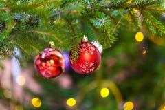 Zwei rote Bälle auf dem Weihnachtsbaumzweig Innen Lizenzfreie Stockbilder