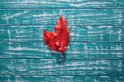 Zwei rote Blätter auf altem hölzernem blauem Hintergrund Lizenzfreies Stockfoto