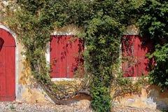 Zwei rote Fenster und eine Tür surronded durch eine Kriechpflanze Lizenzfreies Stockfoto