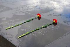 Zwei rote Gartennelken setzten an eine Granitoberfläche, die nach dem Regen naß ist Stockfotos