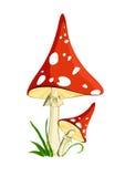 Zwei rote Pilze Lizenzfreie Stockfotos