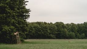 Zwei Rotwild auf einer Waldlichtung stockfotos