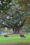 Zwei ruhige Bänke durch einen großen Baum stockfotografie