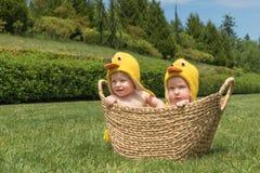 Zwei Säuglingsbabys in den Ostern-Hühnerkostümen innerhalb des Korbes auf grünem Gras stockfotografie