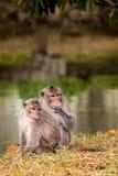 Zwei süße Affen Lizenzfreie Stockfotos