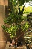Zwei saftige Anlagen innerhalb der Mittelblöcke in einem saftigen Garten stockfoto