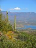 Zwei Saguaros über Roosevelt Lake stockfoto