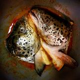 Zwei Salmon Heads in einem Topf Stockfotos