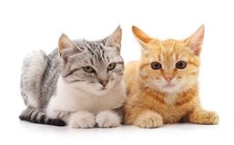 Zwei schöne Katzen stockfotos
