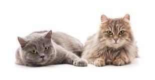 Zwei schöne Katzen lizenzfreie stockbilder