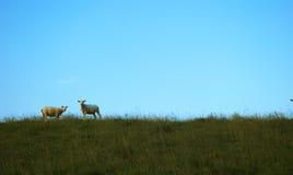 Zwei Schafe auf einem Hügel Lizenzfreies Stockfoto