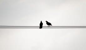 Zwei Schattenbildvögel auf dem Strom verkabeln auf weißem backgroun Stockbilder
