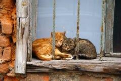 Zwei schläfrige Katzen auf altem Fenster Stockfotografie