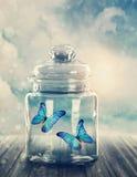 Zwei Schmetterlinge geschlossen stockfoto