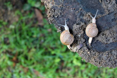 Zwei Schnecken auf einem Baumstumpf Lizenzfreie Stockfotos