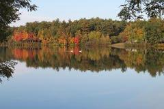 Zwei Schwäne auf Autumn Pond Stockbild