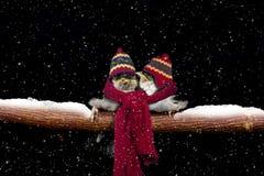 Zwei Schwalben im Winter oben streichelnd lizenzfreies stockfoto