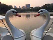 Zwei Schwan-Boots-Art, die zusammen wie Herz-Form schwimmt Stockfotos