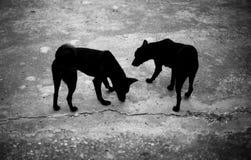 Zwei schwarze Hunde auf dem Boden Lizenzfreie Stockbilder
