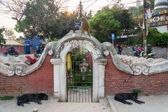 Zwei schwarze Hunde und ein Affe am 25. März 2018 in Kathmandu, Nepa Stockbild