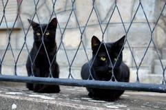 Zwei schwarze Katzen Stockbilder