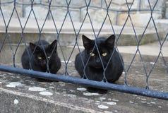 Zwei schwarze Katzen Lizenzfreies Stockbild