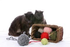 Zwei schwarze Katzen drehen einen Korb des Garns um Stockbild