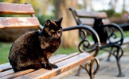 Zwei schwarze Katzen mit grünen Augen sitzen auf Parkbänke stock abbildung