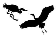 Zwei schwarze Schattenbilder großer weißer Reiher Lizenzfreies Stockbild