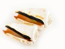 Zwei Seashells Lizenzfreie Stockfotos