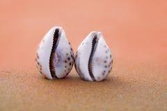 Zwei Seashells auf dem Strand Das Konzept der touristischen Erholung stockfotos