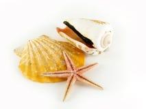 Zwei Seashells und ein Starfish Lizenzfreies Stockfoto