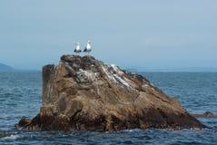 Zwei Seemöwen auf einem Felsen, der aus dem Meer heraus hervorsteht Lizenzfreies Stockfoto