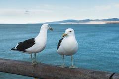 Zwei Seemöwen auf hölzernem Geländer eines Piers Lizenzfreies Stockbild
