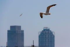 Zwei Seemöwen, die über Twin Tower in Barcelona fliegen Stockbilder