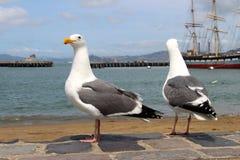 Zwei Seemöwen, die auf dem Ufer und einem Segelboot stehen Stockbilder