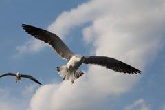 Zwei Seemöwen leben in den Wolken Lizenzfreie Stockfotos