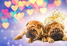 Zwei shar-pei Welpen in der Liebe Lizenzfreie Stockfotos