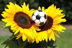 Zwei Sonnenblumen mit Fußball Stockfoto