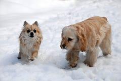 Zwei spielerische Hunde im Schnee Stockfotos