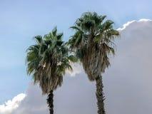 Zwei Spitzen von Palmen gegen einen Hintergrund des bewölkten Himmels lizenzfreie stockbilder