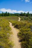Zwei Spuren auf einem Berg mit Kiefern lizenzfreie stockfotos
