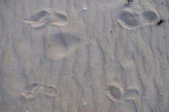 Zwei Spuren von Beinen auf Sand lizenzfreie stockfotos