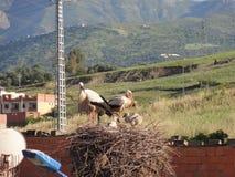 Zwei Störche oben, die ihr Nest an der Spitze eines Laternenpfahls - Vorderansicht machten stockbilder