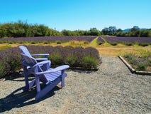 Zwei Stühle im Lavendelbauernhof Lizenzfreies Stockfoto