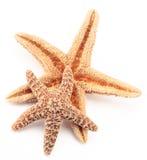 Zwei Starfish Lizenzfreie Stockfotos